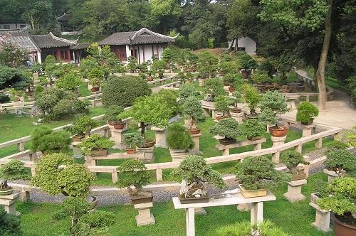 collection bonzai - jardin classique de suzhou